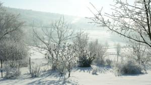 zima 2017 ogród