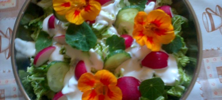 Letnia sałatka z kwiatów – dlaczego nie?