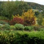 ogród jesień 2018